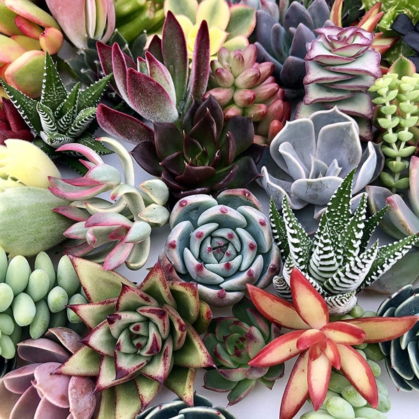 How Not to Kill Your Succulent