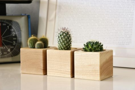 How To Take Care Of Cacti and Succulents